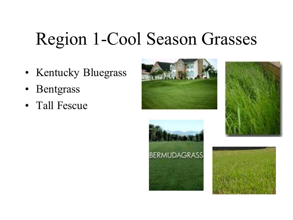 Region 2- Transition Zone Bermudagrass Zoysia Centipedegrass St.
