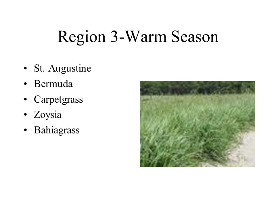 Cool Season Grasses Grow best in spring and fall Stay green in winter Tall Fescue, Kentucky Bluegrass, Fine Fescue, Perennial Ryegrass, Annual Ryegrass