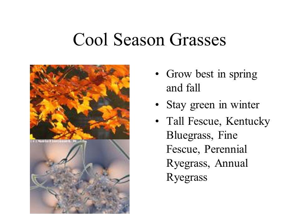 Warm Season Grasses Grow best in summer Go dormant in winter Bermudagrass, Zoysia, St.