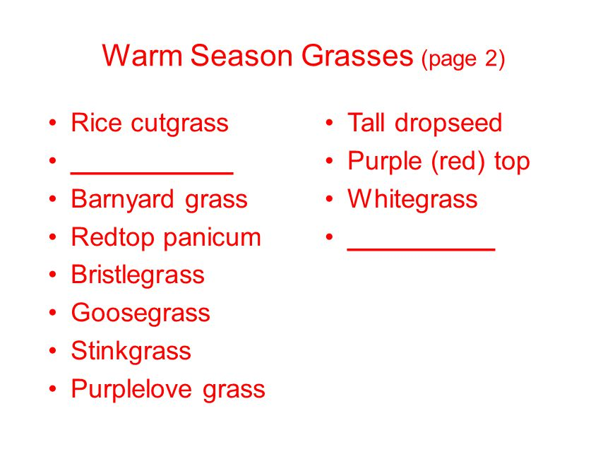Warm Season Grasses (page 2) Rice cutgrass ___________ Barnyard grass Redtop panicum Bristlegrass Goosegrass Stinkgrass Purplelove grass Tall dropseed