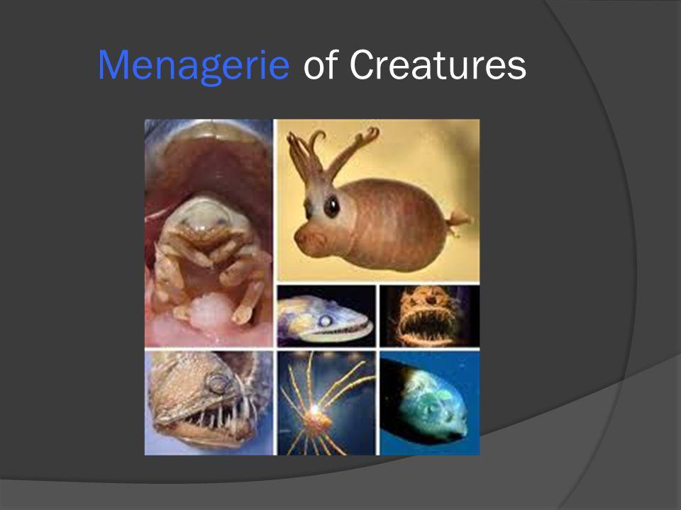 Menagerie of Creatures