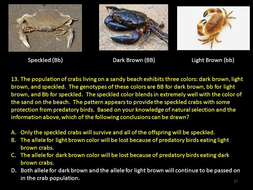 Speckled (Bb)Dark Brown (BB)Light Brown (bb) 13.