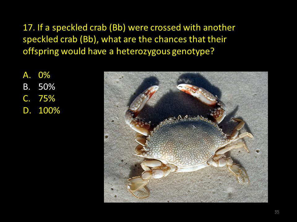 17. If a speckled crab (Bb) were crossed with another speckled crab (Bb), what are the chances that their offspring would have a heterozygous genotype