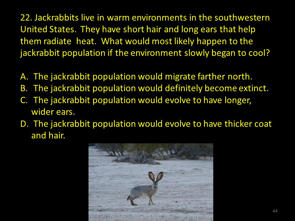 22.Jackrabbits live in warm environments in the southwestern United States.