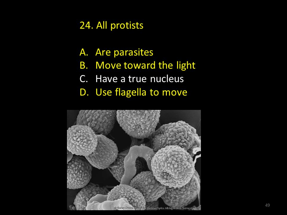 24.All protists A. Are parasites B. Move toward the light C.