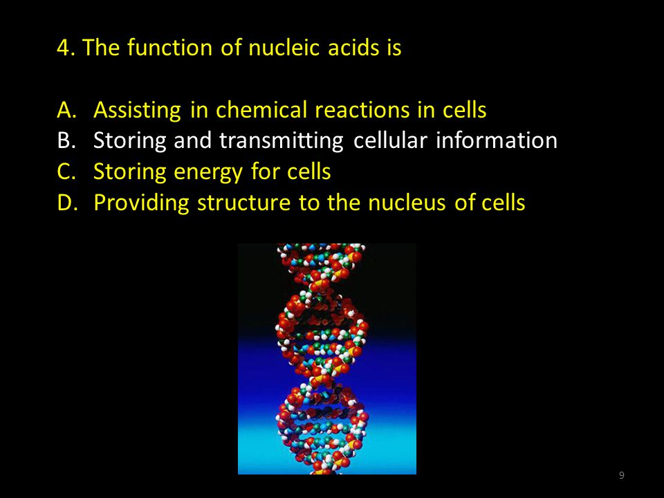 4.The function of nucleic acids is A. Assisting in chemical reactions in cells B.