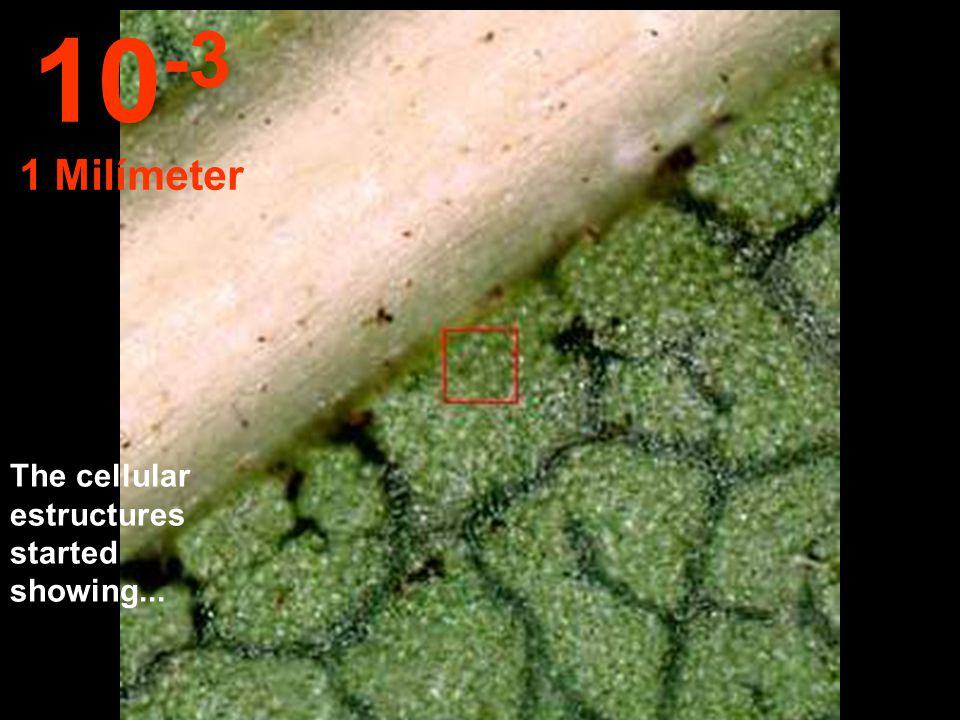 At this distance it is possible observe the estructures of the leave. 10 -2 1 Centímeter