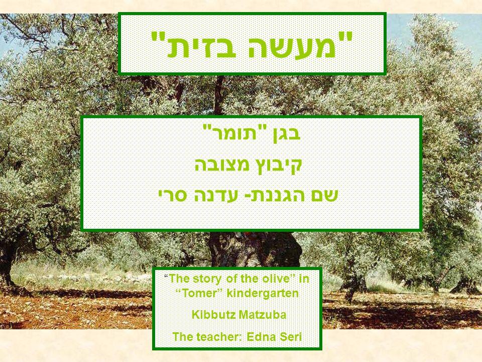 מעשה בזית בגן תומר קיבוץ מצובה שם הגננת- עדנה סרי The story of the olive in Tomer kindergarten Kibbutz Matzuba The teacher: Edna Seri