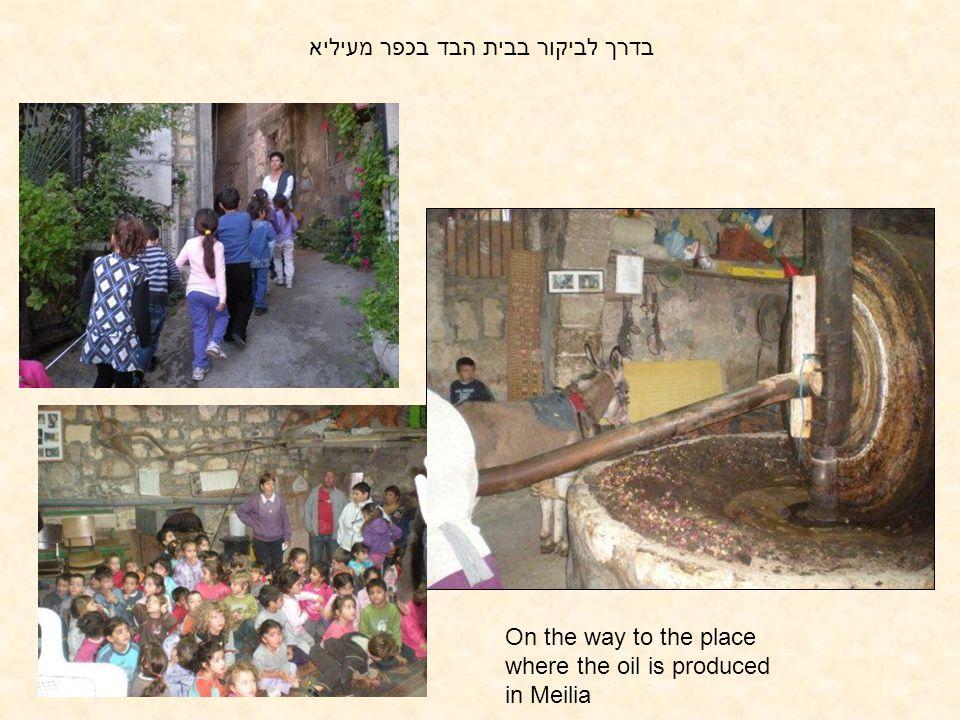 בדרך לביקור בבית הבד בכפר מעיליא On the way to the place where the oil is produced in Meilia