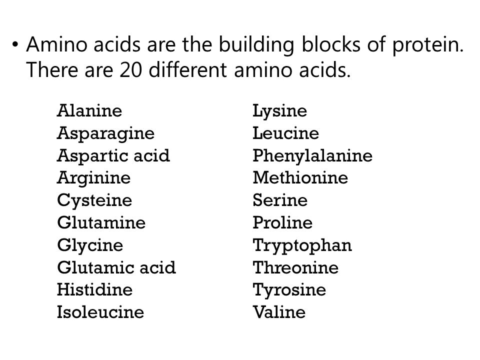 Amino acids are the building blocks of protein. There are 20 different amino acids.