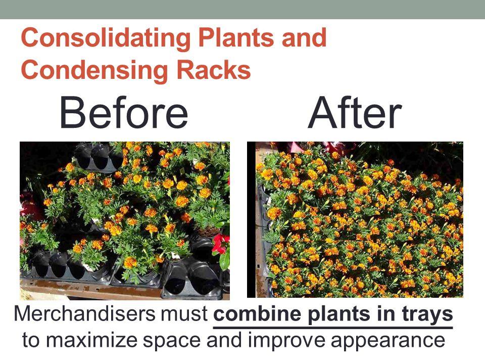 Basics of Plant Merchandising Consolidating Striping Waterfalling Facing Product Fronting Product Illusion of Fullness