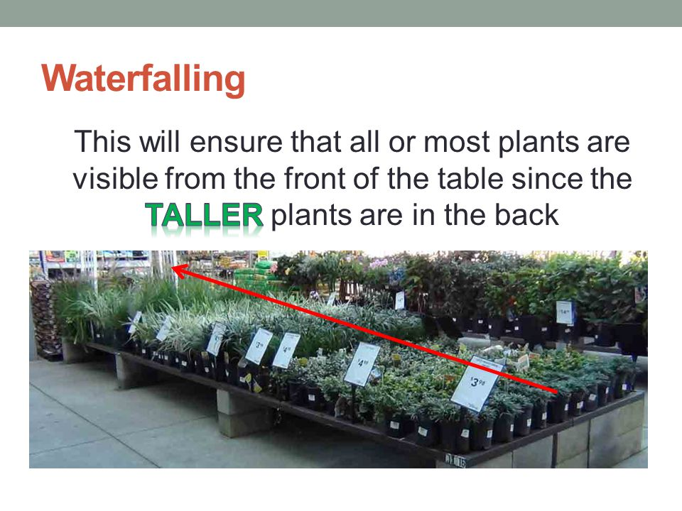 Waterfalling Place plants, within the same variety and price – on the table, pallet or rack – To the tallest at the back From the shortest at the front