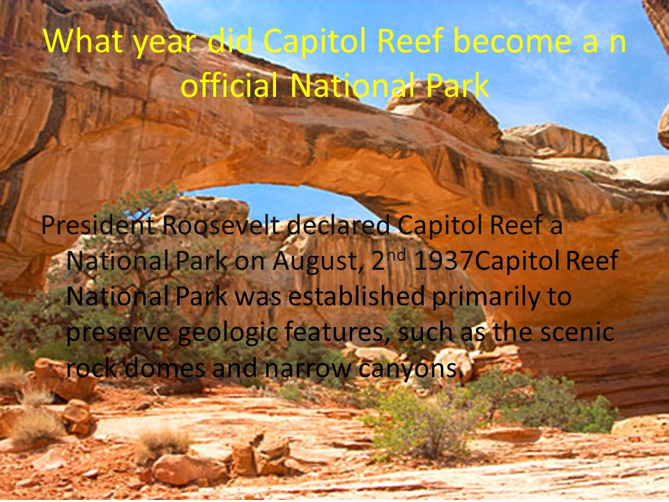 What year did Capitol Reef become a n official National Park President Roosevelt declared Capitol Reef a National Park on August, 2 nd 1937Capitol Reef National Park was established primarily to preserve geologic features, such as the scenic rock domes and narrow canyons.