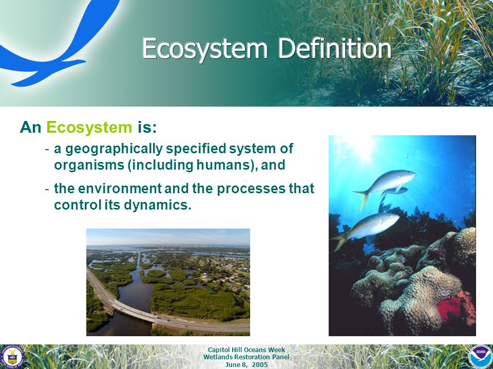 Capitol Hill Oceans Week Wetlands Restoration Panel June 8, 2005 An Ecosystem is: -a geographically specified system of organisms (including humans),
