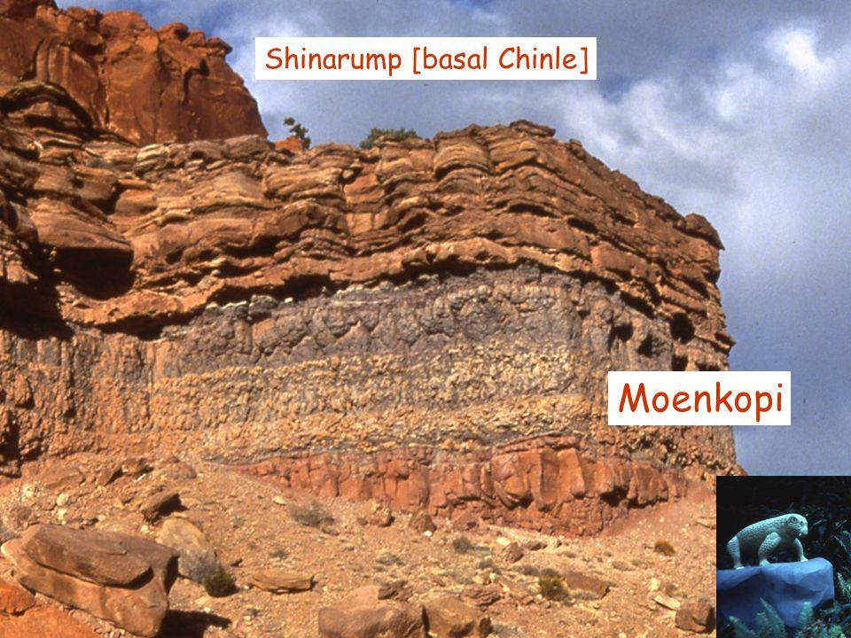 Moenkopi Shinarump [basal Chinle]