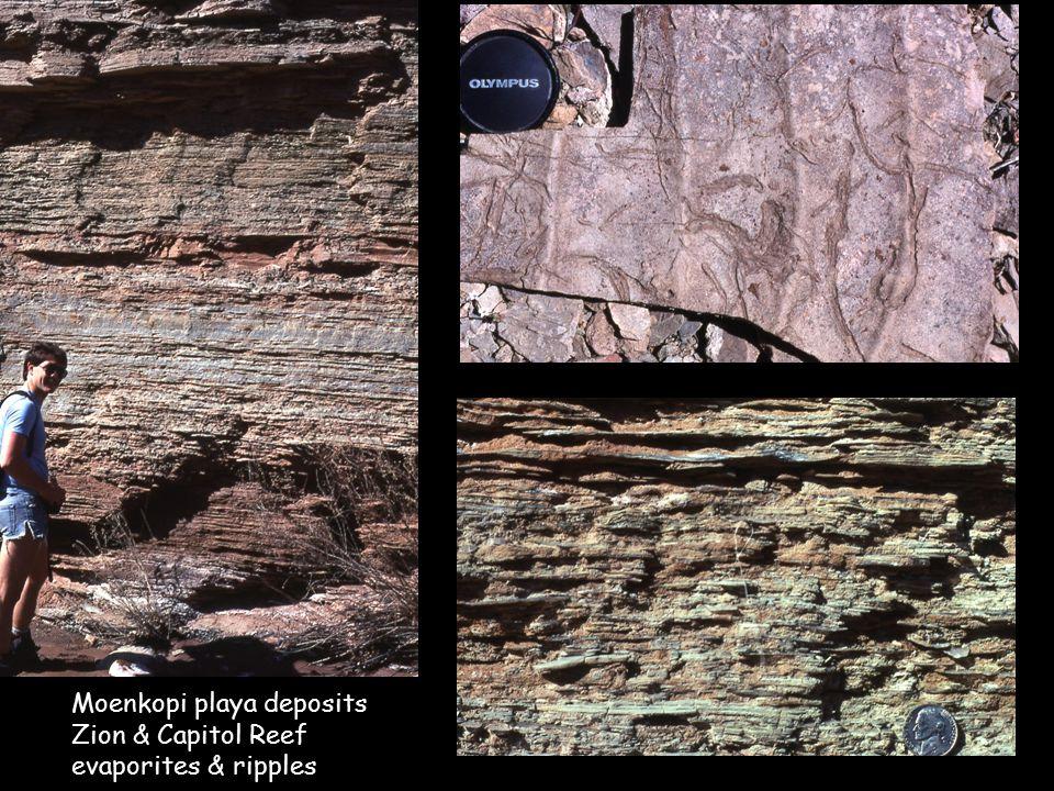 Moenkopi playa deposits Zion & Capitol Reef evaporites & ripples