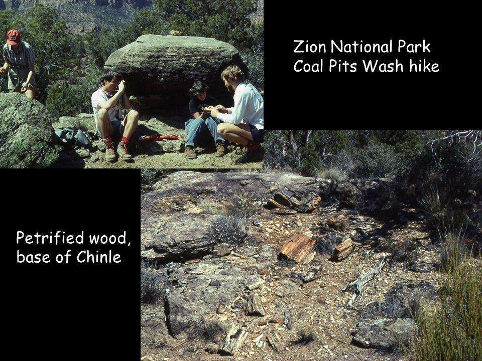 Petrified wood, base of Chinle Zion National Park Coal Pits Wash hike