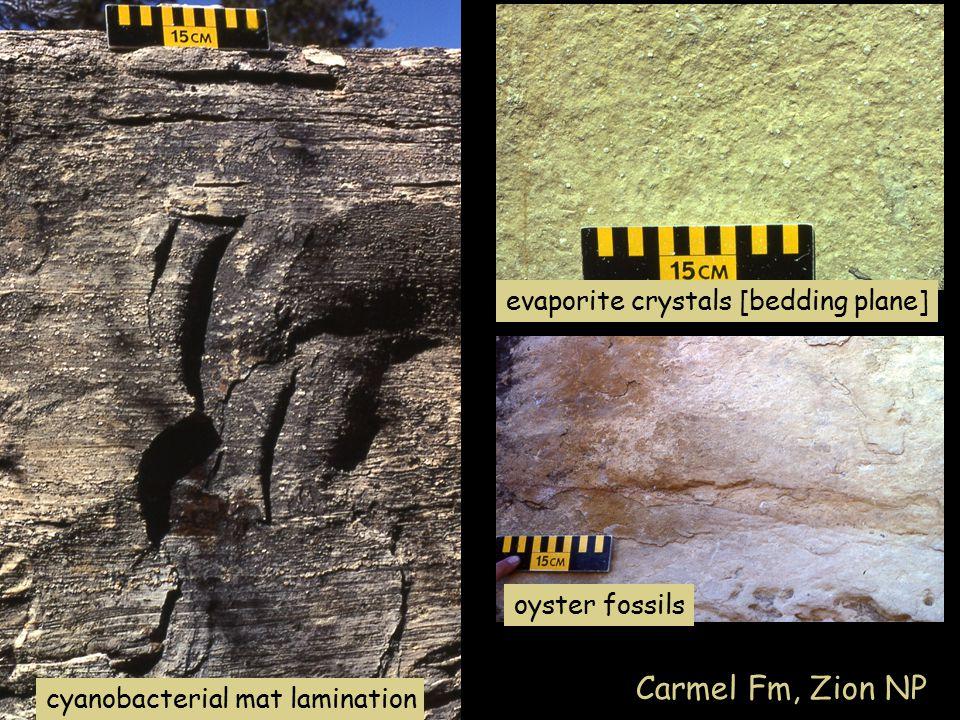 evaporite crystals [bedding plane] oyster fossils cyanobacterial mat lamination Carmel Fm, Zion NP