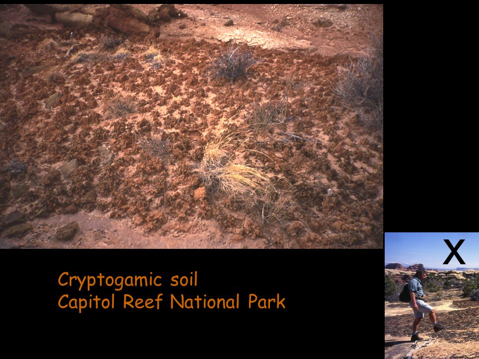 x Cryptogamic soil Capitol Reef National Park