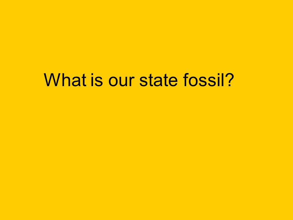 What is our state fossil?