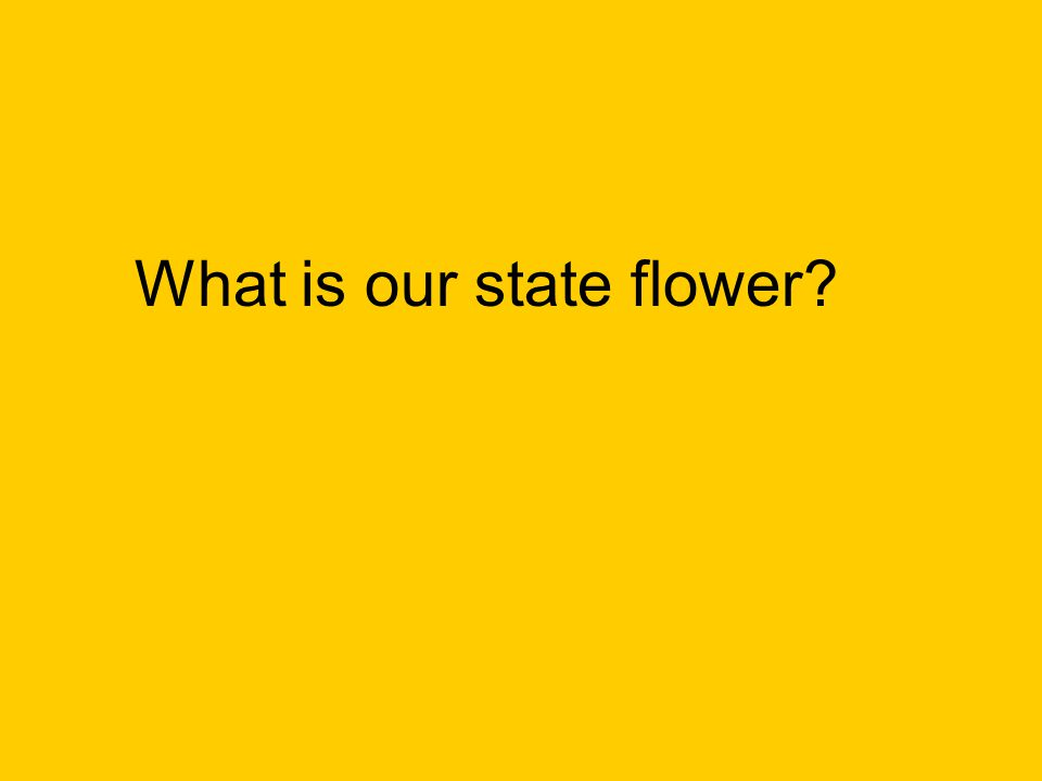 What is our state flower?