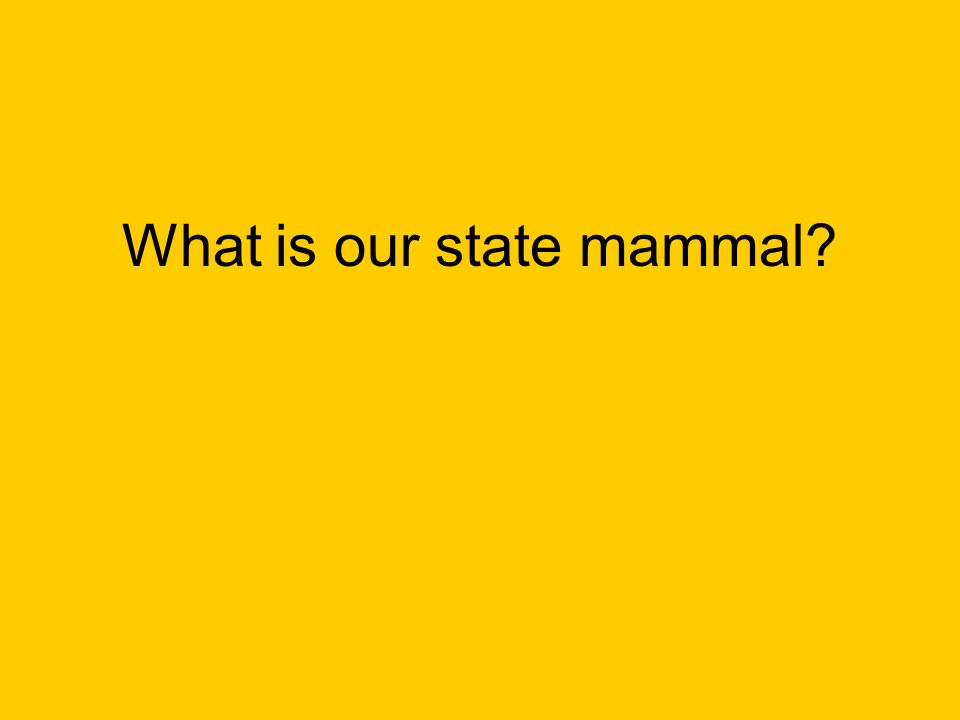 What is our state mammal?