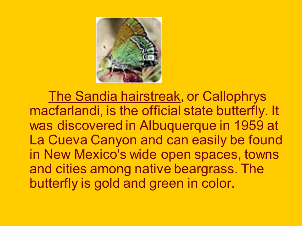 The Sandia hairstreak, or Callophrys macfarlandi, is the official state butterfly.