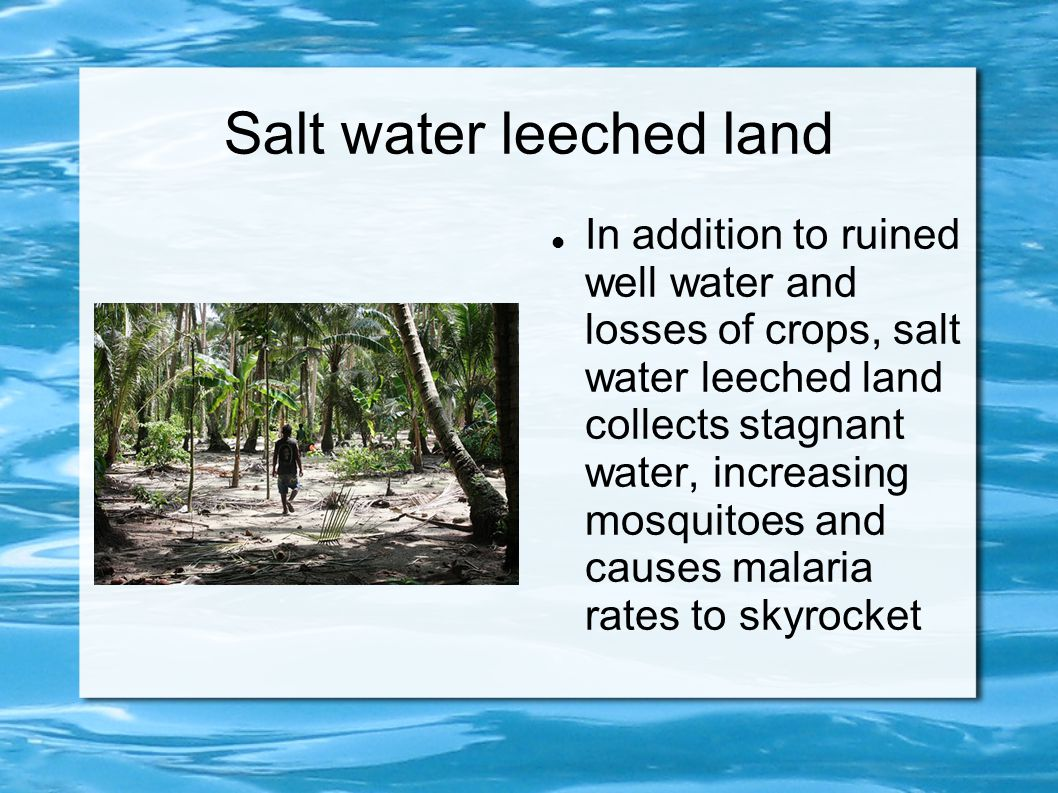 Salt water leeched land In addition to ruined well water and losses of crops, salt water leeched land collects stagnant water, increasing mosquitoes a