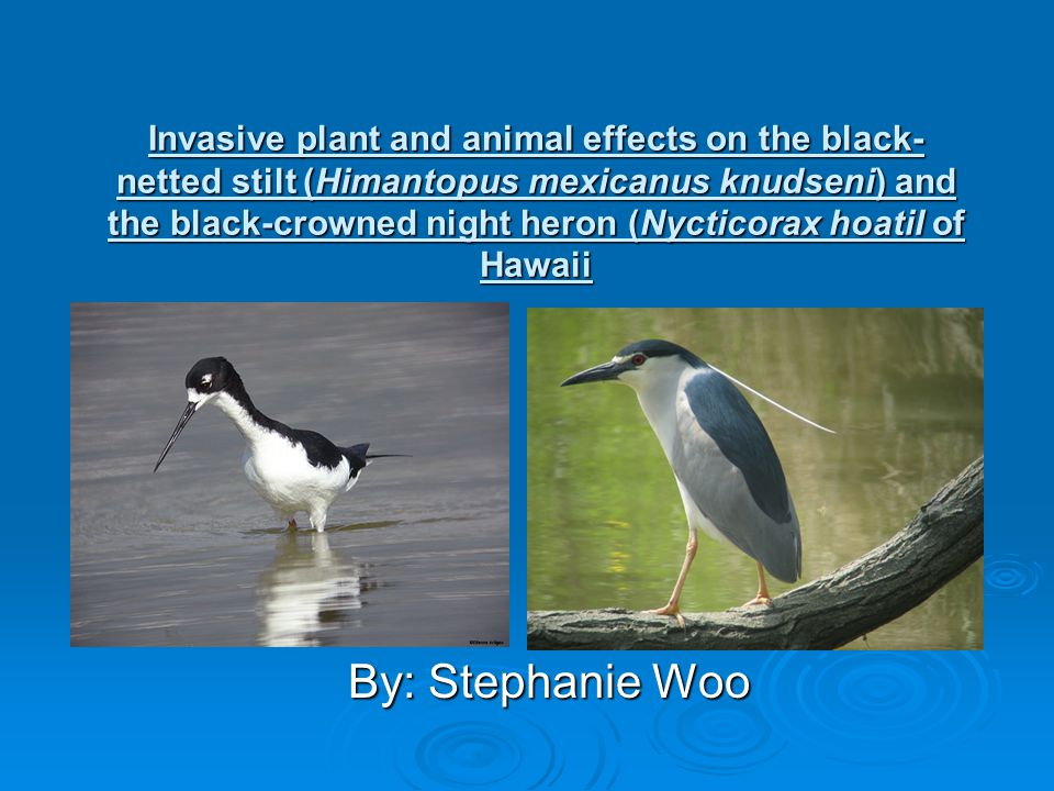  Hawaii is often referred to as the endangered species capitol of the world and the extinction capitol of the United States  After the introduction of non-native species of plants and animals, many of Hawaii's native species are being lost  Although much of the loss of wetlands is caused by human destruction, alien species of plants and animals have caused many species of native birds and plants to become endangered, and in some cases, extinct