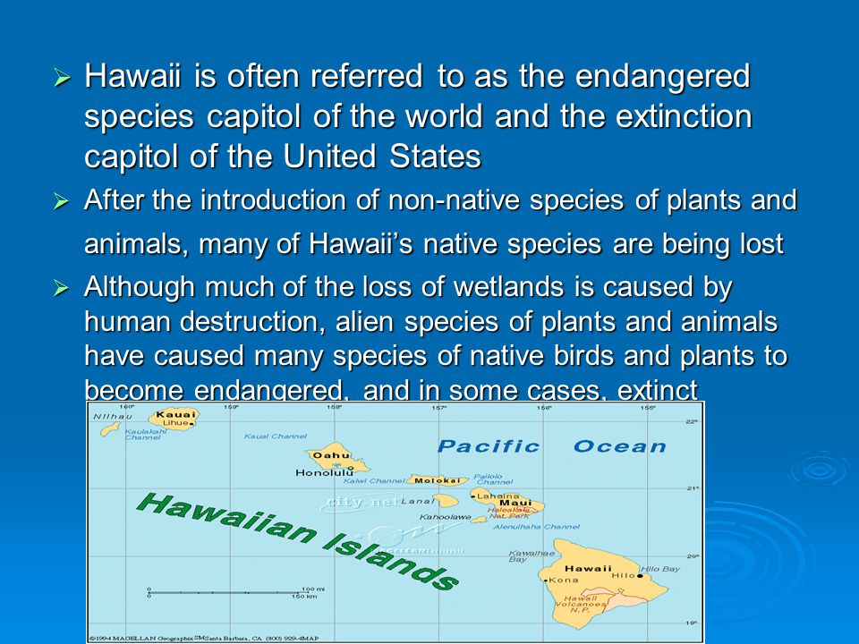  Hawaii is often referred to as the endangered species capitol of the world and the extinction capitol of the United States  After the introduction of non-native species of plants and animals, many of Hawaii's native species are being lost  Although much of the loss of wetlands is caused by human destruction, alien species of plants and animals have caused many species of native birds and plants to become endangered, and in some cases, extinct