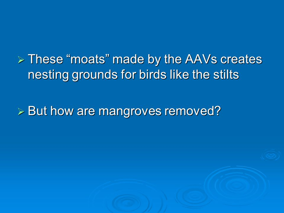  These moats made by the AAVs creates nesting grounds for birds like the stilts  But how are mangroves removed