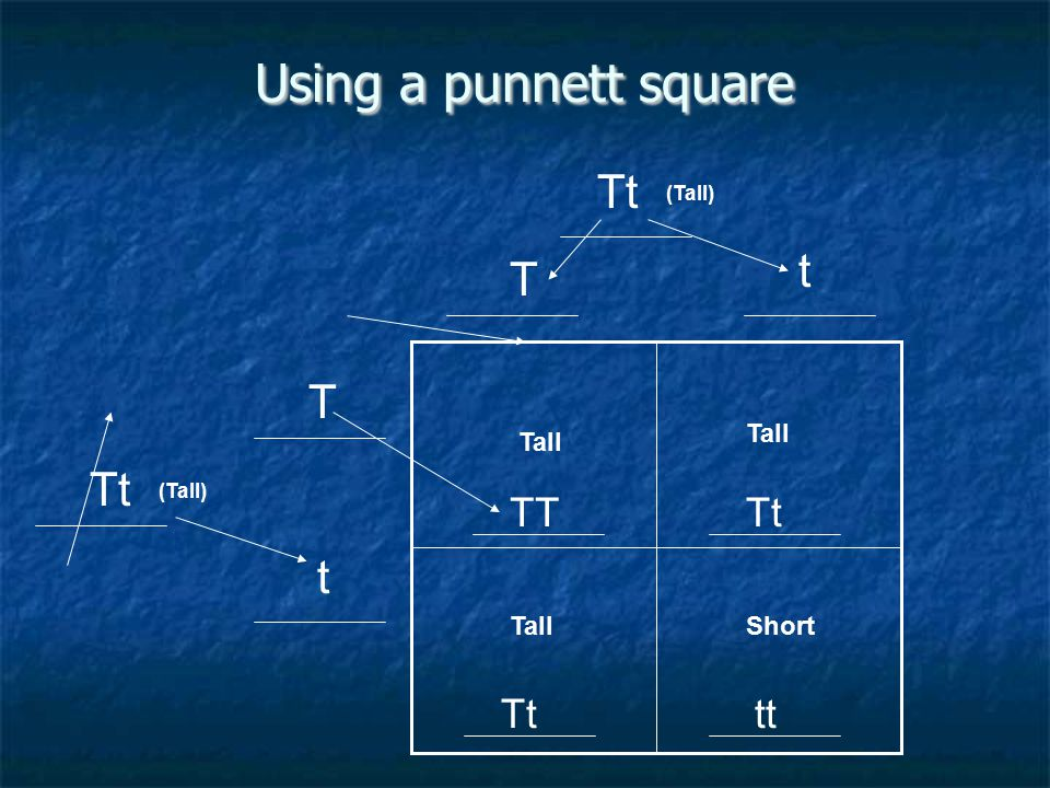 Using a punnett square Tt T t T t TT Tt tt (Tall) Tall Short