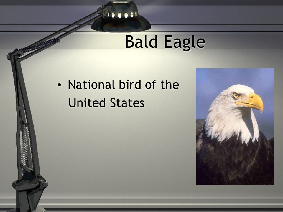 National bird of the United States National bird of the United States
