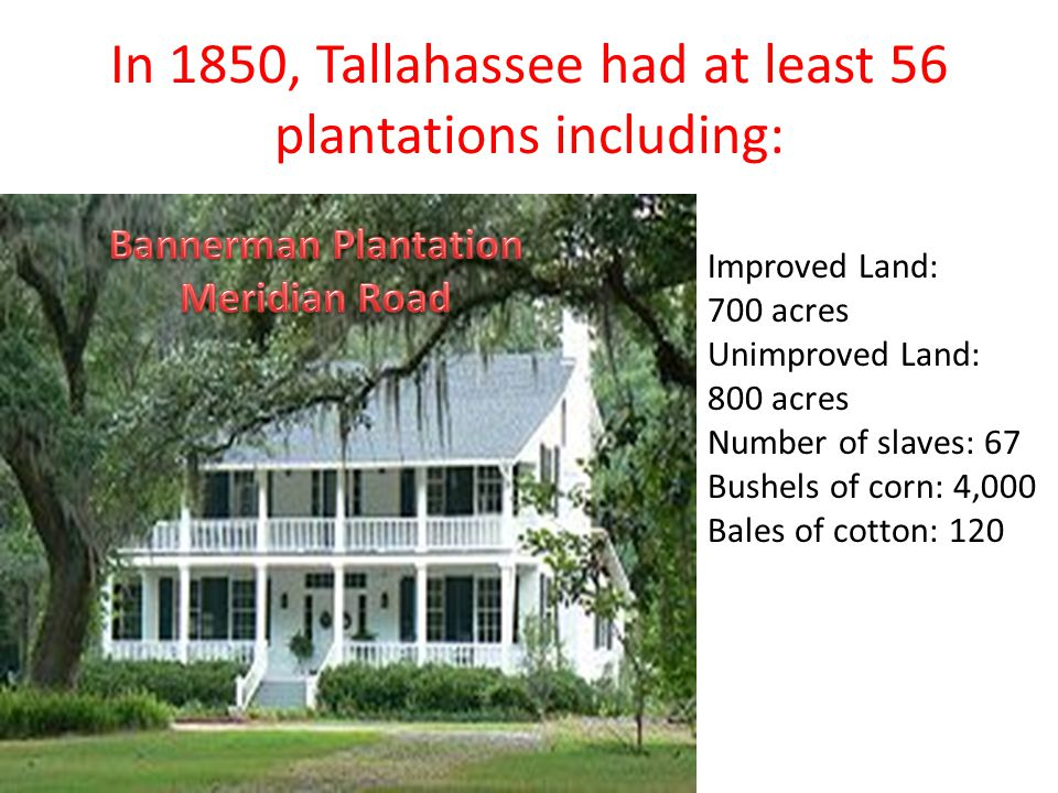 In 1850, Tallahassee had at least 56 plantations including: Improved Land: 700 acres Unimproved Land: 800 acres Number of slaves: 67 Bushels of corn: 4,000 Bales of cotton: 120