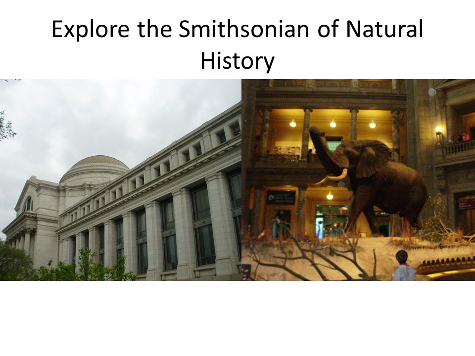 Explore the Smithsonian of Natural History