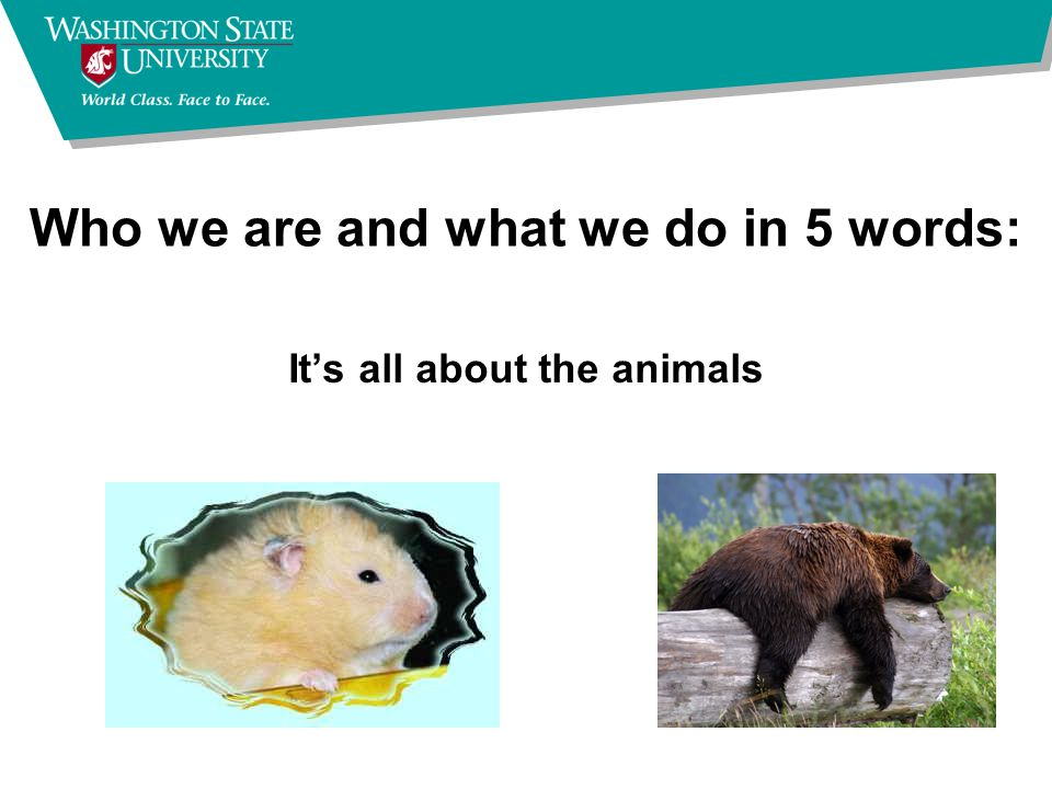 Who we are and what we do in 5 words: It's all about the animals