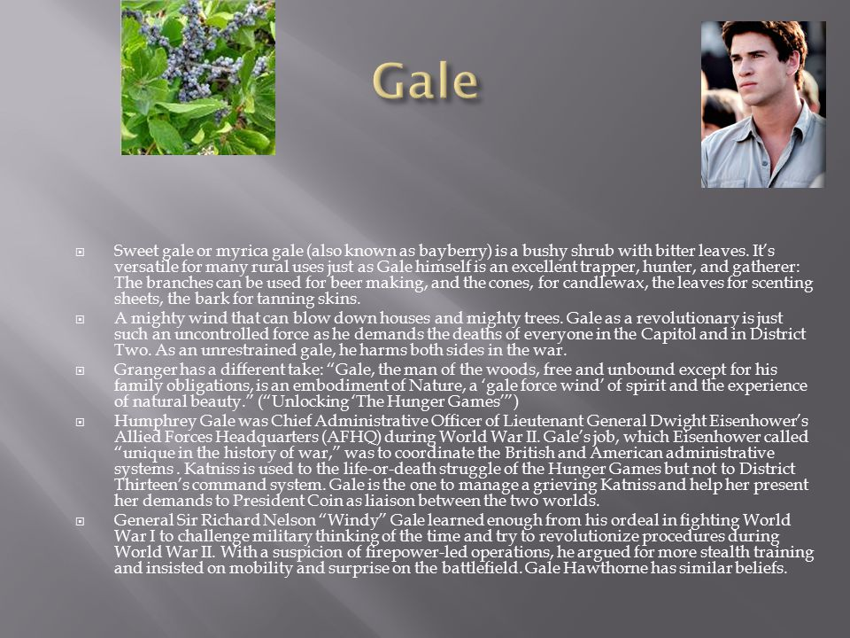  Sweet gale or myrica gale (also known as bayberry) is a bushy shrub with bitter leaves. It's versatile for many rural uses just as Gale himself is a