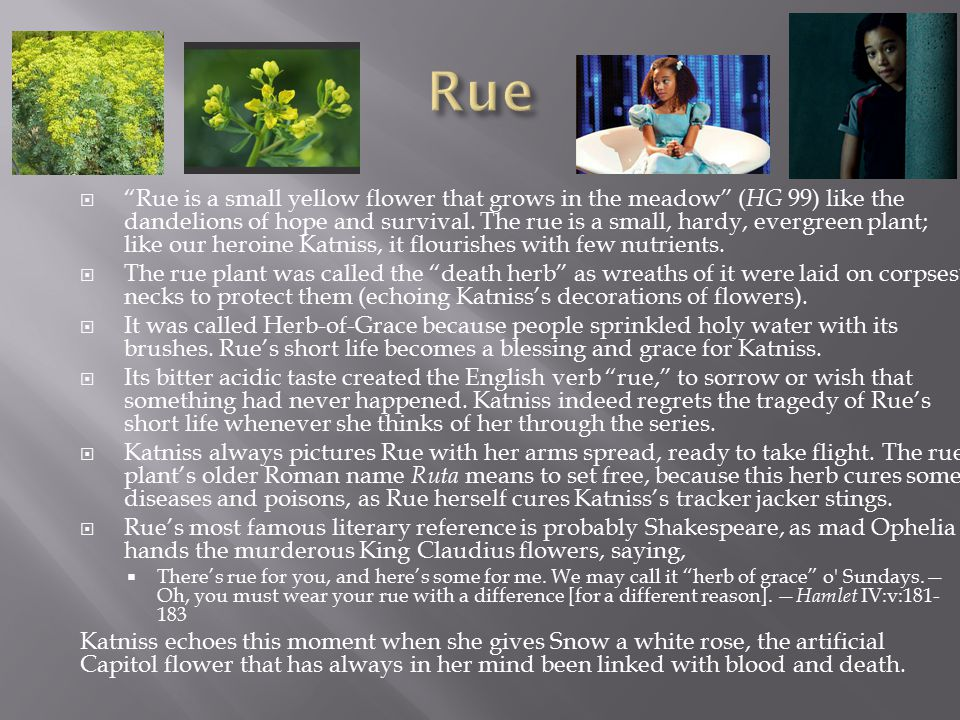 " ""Rue is a small yellow flower that grows in the meadow"" ( HG 99) like the dandelions of hope and survival. The rue is a small, hardy, evergreen plan"