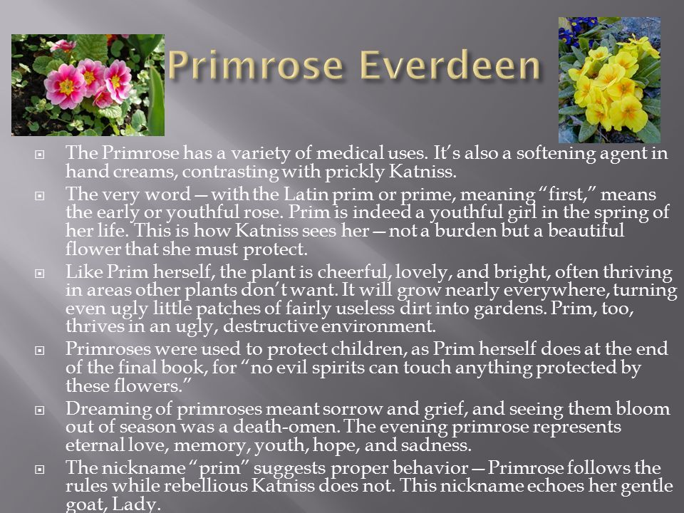  The Primrose has a variety of medical uses. It's also a softening agent in hand creams, contrasting with prickly Katniss.  The very word—with the L