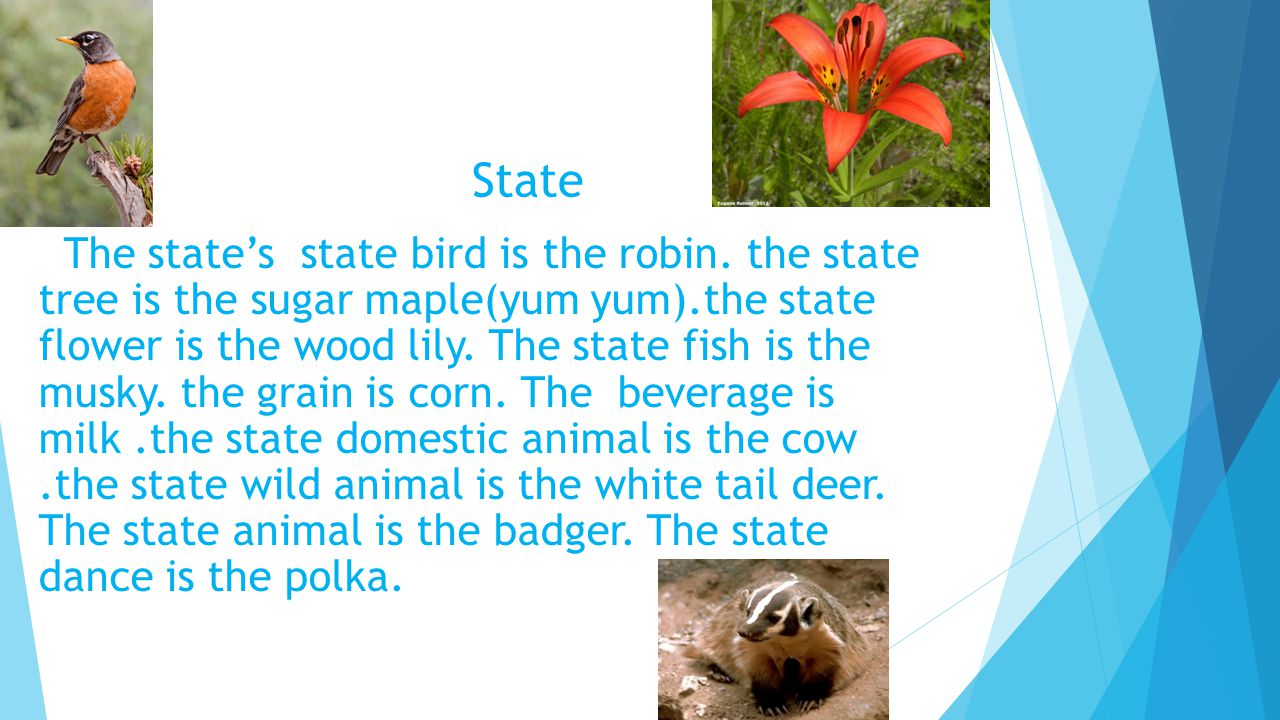 State The state's state bird is the robin.