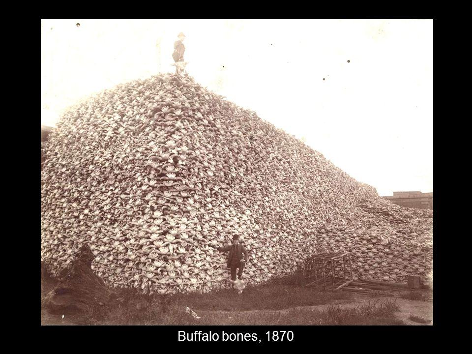 Buffalo bones, 1870