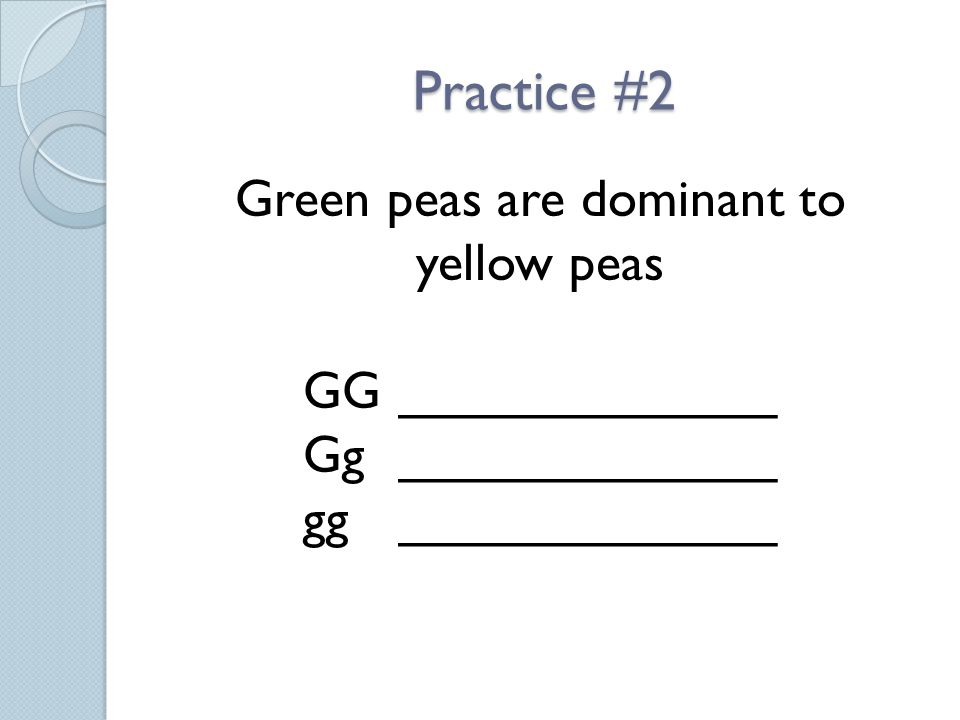 Practice #2 Green peas are dominant to yellow peas GG_____________ Gg_____________ gg_____________