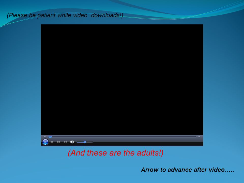 (And these are the adults!) Arrow to advance after video….. (Please be patient while video downloads!)