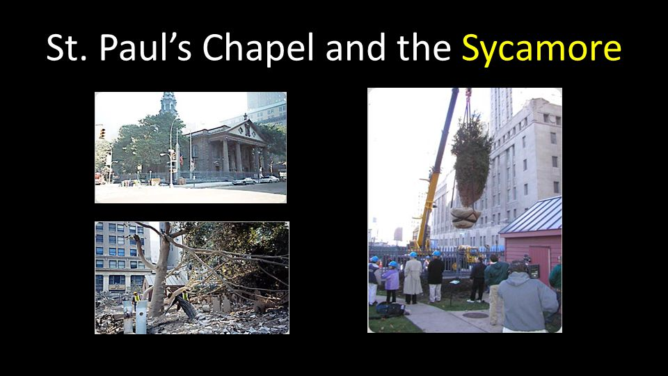 St. Paul's Chapel and the Sycamore