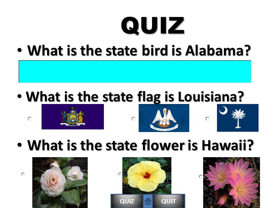 QUIZQUITQUIZ What is the state bird is Alabama. What is the state bird is Alabama.
