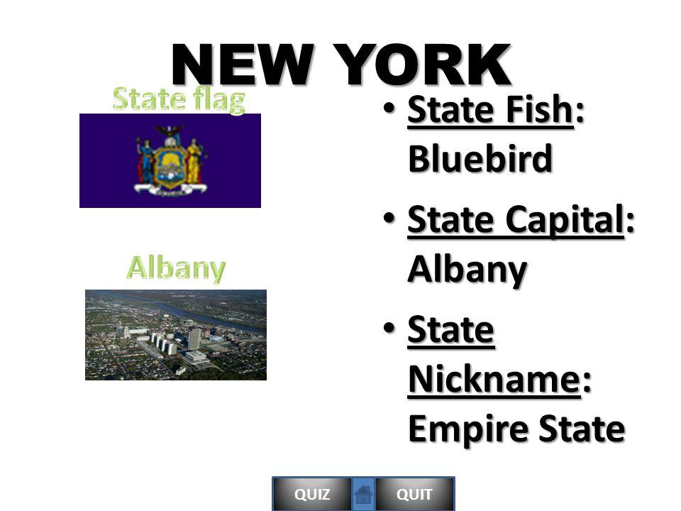 QUIZQUITALABAMA State bird: Yellowhammer State bird: Yellowhammer State Motto: English: We dare defend our rights State Motto: English: We dare defend our rights State Capital: Montgomery State Capital: Montgomery