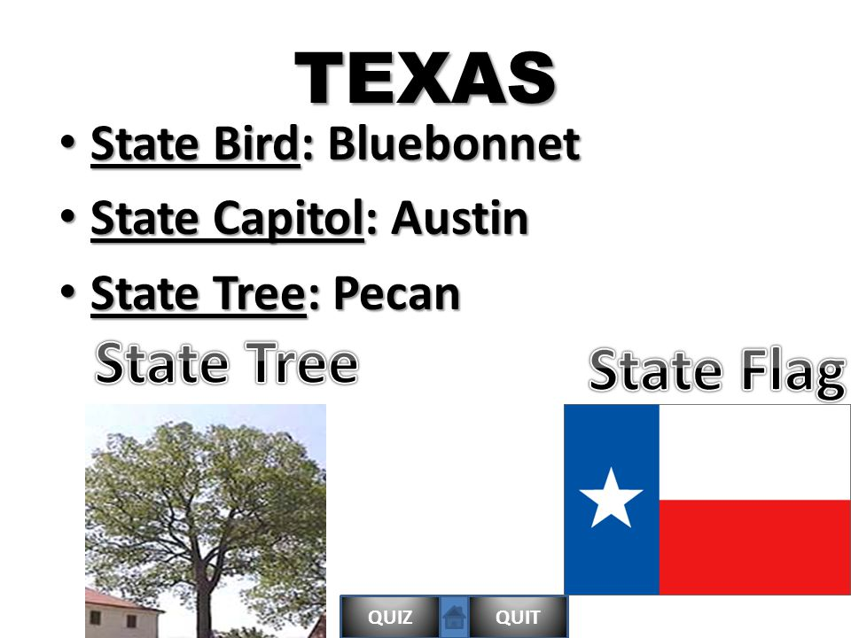 QUIZQUITTEXAS State Bird: Bluebonnet State Bird: Bluebonnet State Capitol: Austin State Capitol: Austin State Tree: Pecan State Tree: Pecan