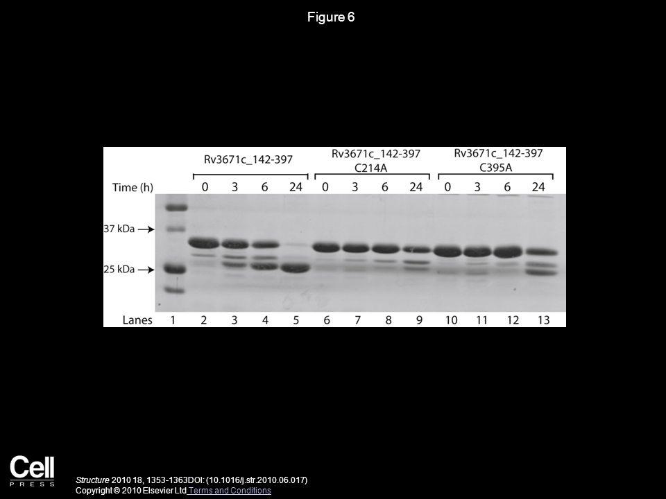 Figure 6 Structure 2010 18, 1353-1363DOI: (10.1016/j.str.2010.06.017) Copyright © 2010 Elsevier Ltd Terms and Conditions Terms and Conditions