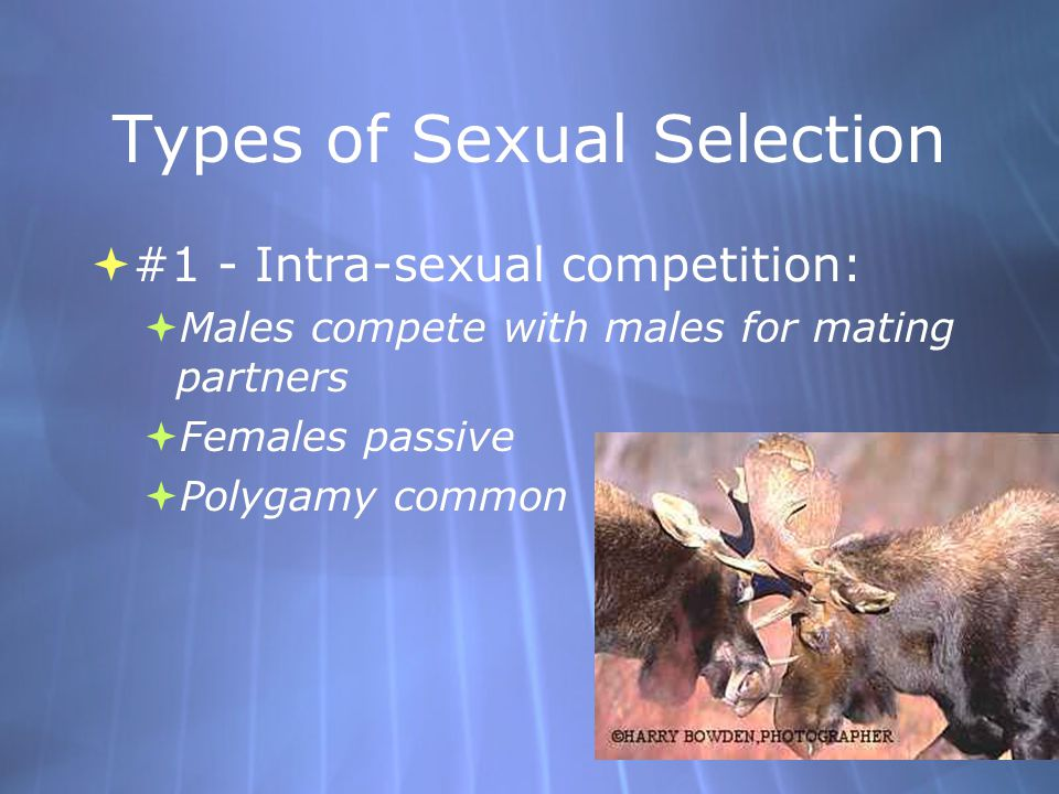 Types of Sexual Selection  #2 - Inter-sexual competition:  Females select males with direct natural selective advantages for their offspring.