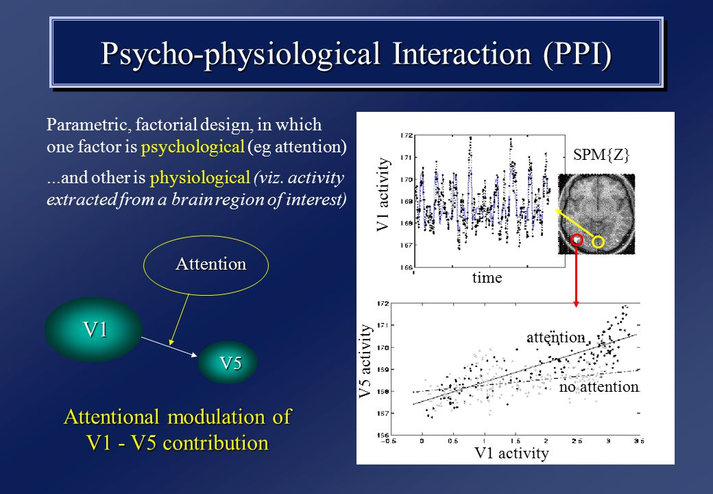 SPM{Z} Attentional modulation of V1 - V5 contribution Attention V1 V5 attention no attention V1 activity V5 activity time V1 activity Psycho-physiological Interaction (PPI) Parametric, factorial design, in which one factor is psychological (eg attention)...and other is physiological (viz.